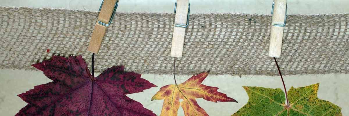 Permalink auf:Herbstklammern